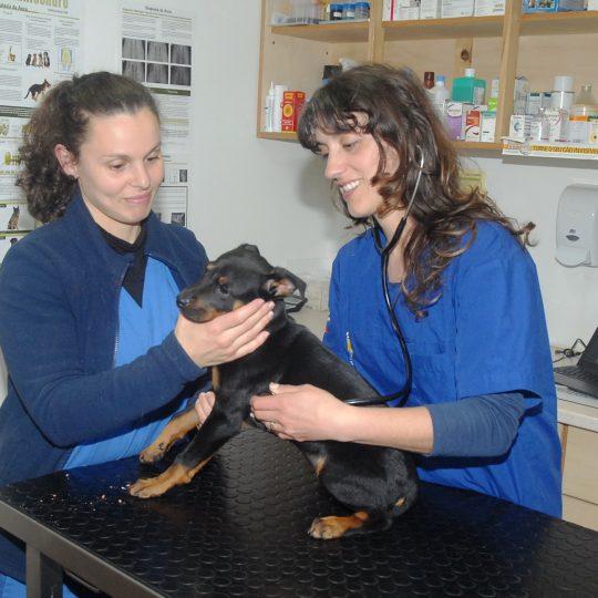 veterinários domicilio madeira
