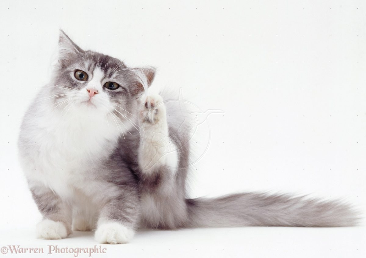 gato-alergia-alimentar-intolerancia-alimentos-1200x847.jpg